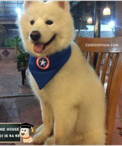 Junie House chuyên cung cấp trang phục cosplay cho chó mèo như áo Adidog có mũ, hiệp sĩ cao bồi, trang phục Superman, Cướp biển, mũ hoàn châu công chúa cho chó mèo, khăn quàng cổ siêu anh hùng cho chó... Hotline 0901 18 46 48