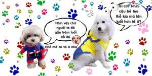 Cách tính tuổi chó mèo - cunsieupham.com