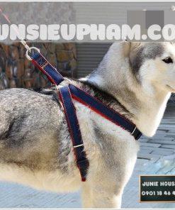 Junie House chuyên cung cấp quần áo, phụ kiện cho thú cưng: Trang phục superman, cướp biển, minions, vòng cổ yếm cho chó lớn | 0901.18.46.48