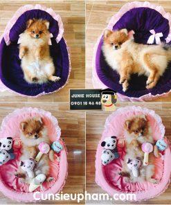 Junie House chuyên cung cấp quần áo, phụ kiện cho thú cưng: Trang phục superman, cướp biển, minions, nệm công chúa cho chó mèo | 0901.18.46.48