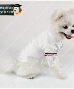 Junie House chuyên cung cấp quần áo, phụ kiện cho thú cưng: Trang phục superman, cướp biển, minions, áo sơ mi T-Browne dành cho chó mèo | 0901.18.46.48